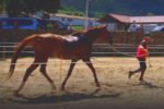 Luna CC caballo venta