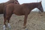 Quinqui caballo venta