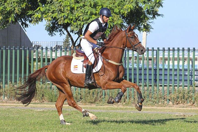 pruebas caballos jovenes cce aeccaa