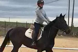 caballo venta cheni