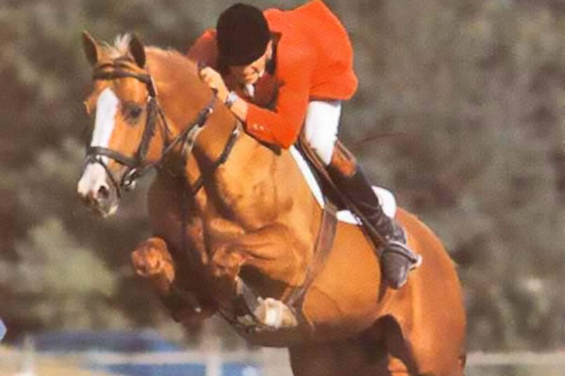 equus-d-olympe-semental-aeccaa