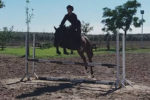 anghus caballo en venta anglo-arabe