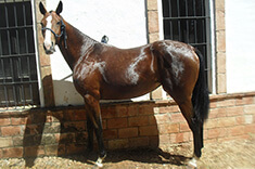 Eureka caballo venta