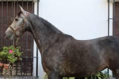 Lupita caballo venta