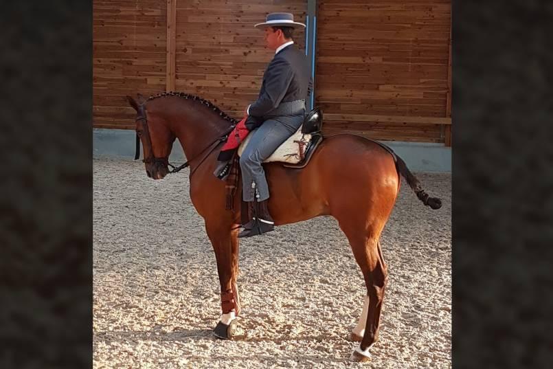 El fin de semana del 26 y 27 de octubre, se celebró en la Hacienda Montemaría, en Marbella, el Campeonato de Andalucía de Equitación de Trabajo.
